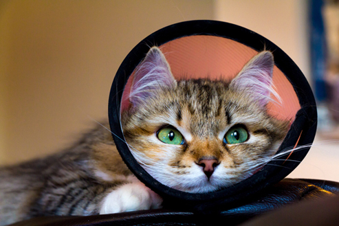 Cat with a cone
